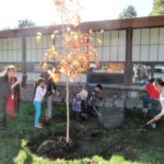 Kinsey Inquiry and Discovery School receives a new tree as part of Arizona Community Tree Project