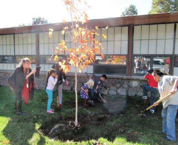 kinsey-inquiry-and-discovery-school-received-a-new-tree